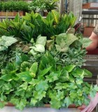 Assortments Tropical Foliage 4 in