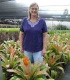 Bromeliad Aechmea Patricia