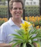 Bromeliad Guzmania Diane