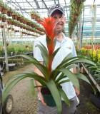 Bromeliad Guzmania Michiel 5 in