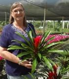 Bromeliad Guzmania Patricia