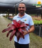 Bromeliad Neoregelia Malbec 6 in