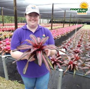 Bromeliad Neoregelia Margaret 6 in