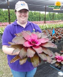 Bromeliad Neoregelia Purple Passion 6 in
