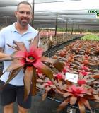 Bromeliad Neoregelia Roots & Roots 6 in