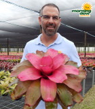 Bromeliad Neoregelia Seduction 6 in
