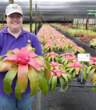 Bromeliad Neoregelia Sexy Pink 6 in