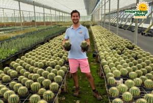 Cactus Barrel Varieties 6 in