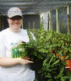 Calathea Lancifolia rattlesnake plant