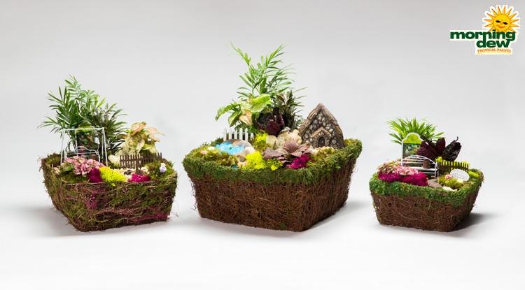 Bon Dish Garden Fairy Moss