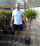 Dracaena Marginata Braid 12 in