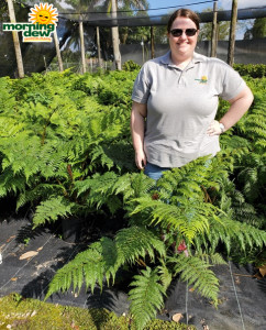 Fern Australian Tree 10 in