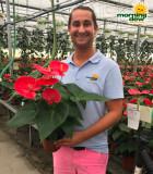 Flowering Anthurium Alabama 6 in