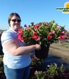 Flowering Dipladenia Bush 10 in