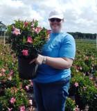 Dipladenia Bush Rio Pink