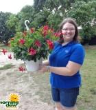 Mandevilla Hanging Basket Red Crimson