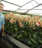 Orchid Phalaenopsis Multi Spike
