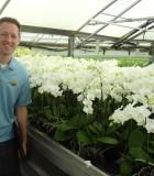 Orchid Phalaenopsis White Multi