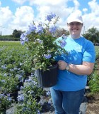 Flowering Plumbago Bush Blue 10 in