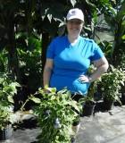 Thunbergia Grandiflora Variegated