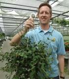 Hanging Basket Hoya Pubea