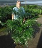 Palm Cataractarum 10 in