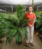Palm Cataractarum