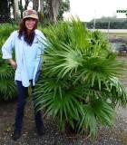 Palm Chinese Fan 14 in