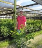 Schefflera Arboricola Bush umbrella plant