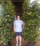Schefflera Arboricola Bush Gold Capella Column umbrella plant