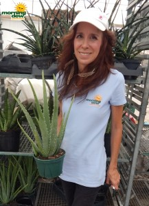 Succulents Aloe Vera 6 in
