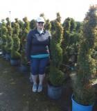 Topiary Eugenia Spiral