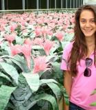bromeliad aechmea primera