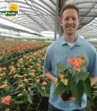 anthurium prince of orange