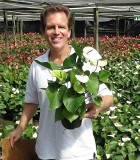 anthurium white heart