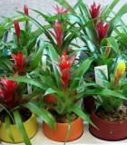 assorted bromeliad