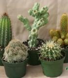 assorted cactus