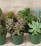 assorted cactus succulents