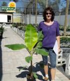 banana fingers plant