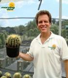 barrel golden cactus