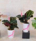 bca pots w assorted foliage