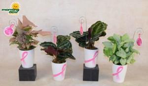 bca pots w assorted foliage