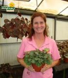 begonia strawberry