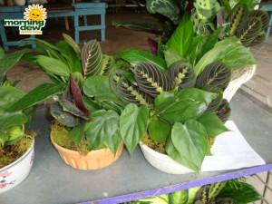 ceramic lindel dish garden