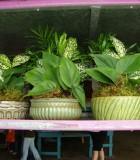 ceramic lotus dish garden