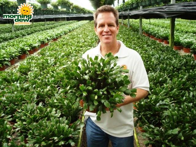 Christmas Morning Dew Tropical Plants