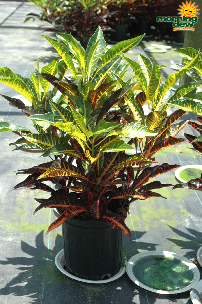 Colorful Shade Plants