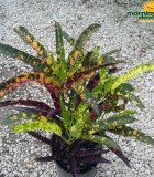 croton franklin roosevelt
