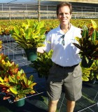 croton petra yellow petra