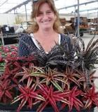 bromeliad cryptanthus